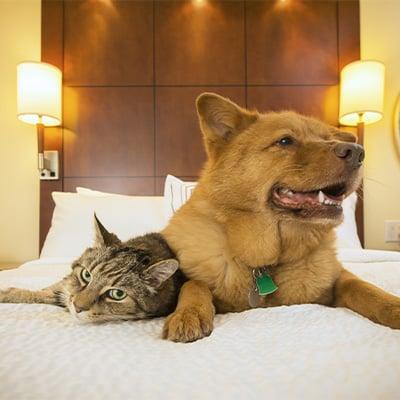 Dog Friendly hotels 6x6