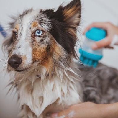 Dog Grooming 6x6